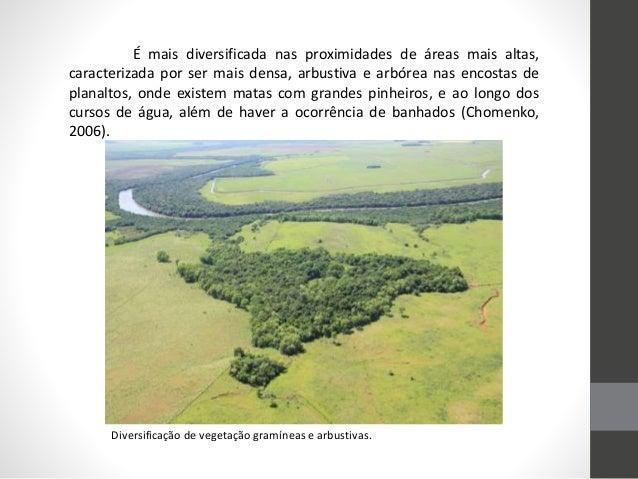 Diversificação de vegetação gramíneas e arbustivas. É mais diversificada nas proximidades de áreas mais altas, caracteriza...