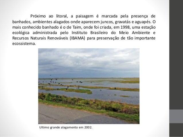 Próximo ao litoral, a paisagem é marcada pela presença de banhados, ambientes alagados onde aparecem juncos, gravatás e ag...