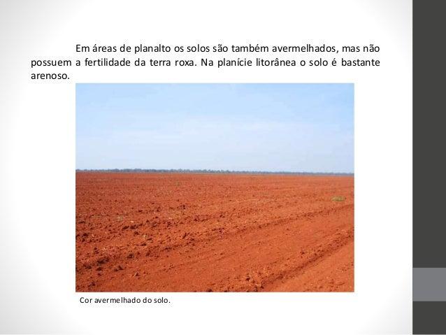 Em áreas de planalto os solos são também avermelhados, mas não possuem a fertilidade da terra roxa. Na planície litorânea ...