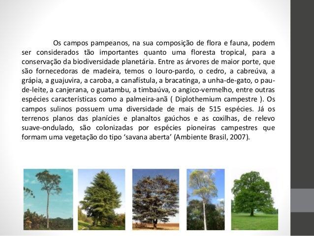 Os campos pampeanos, na sua composição de flora e fauna, podem ser considerados tão importantes quanto uma floresta tropic...