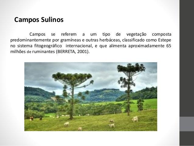 Campos se referem a um tipo de vegetação composta predominantemente por gramíneas e outras herbáceas, classificado como Es...