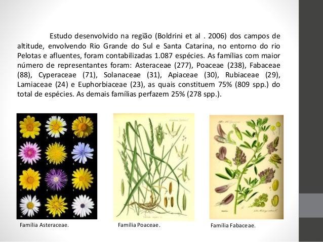 Estudo desenvolvido na região (Boldrini et al . 2006) dos campos de altitude, envolvendo Rio Grande do Sul e Santa Catarin...