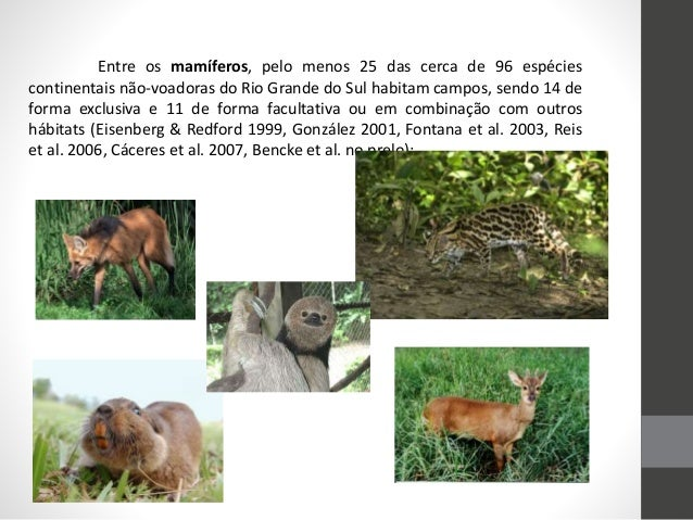 Entre os mamíferos, pelo menos 25 das cerca de 96 espécies continentais não-voadoras do Rio Grande do Sul habitam campos, ...