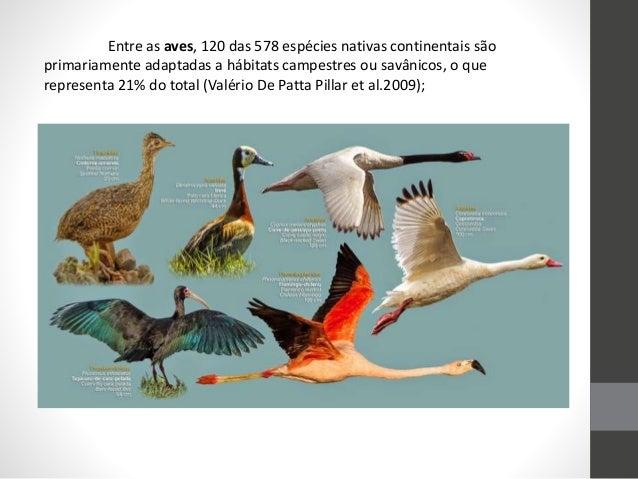Entre as aves, 120 das 578 espécies nativas continentais são primariamente adaptadas a hábitats campestres ou savânicos, o...