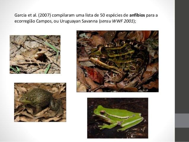 Garcia et al. (2007) compilaram uma lista de 50 espécies de anfíbios para a ecorregião Campos, ou Uruguayan Savanna (sensu...
