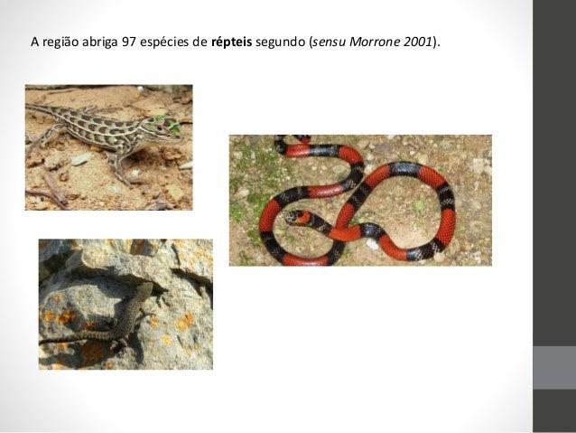 A região abriga 97 espécies de répteis segundo (sensu Morrone 2001).