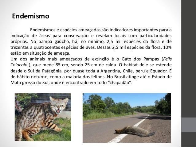 Endemismo Endemismos e espécies ameaçadas são indicadores importantes para a indicação de áreas para conservação e revelam...