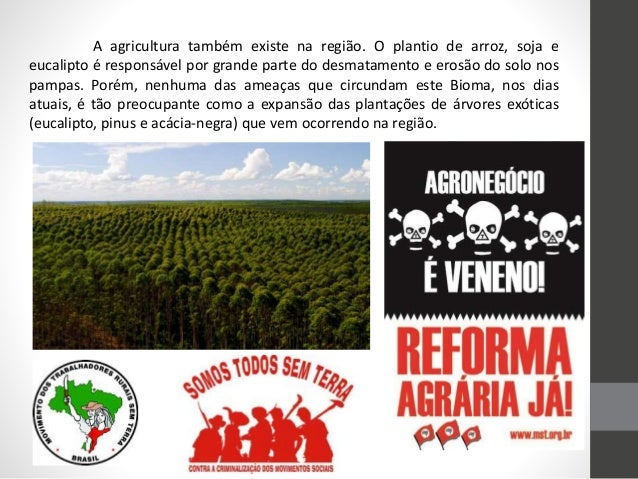 A agricultura também existe na região. O plantio de arroz, soja e eucalipto é responsável por grande parte do desmatamento...