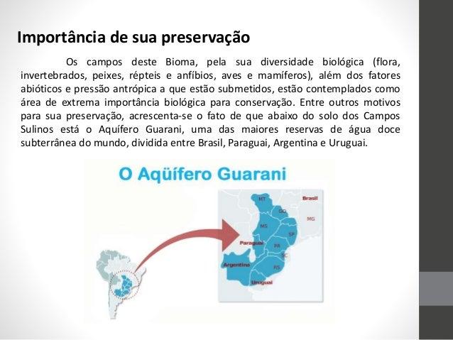 Domínios Brasileiros - Campos Sulinos - Pampas Gaúchos