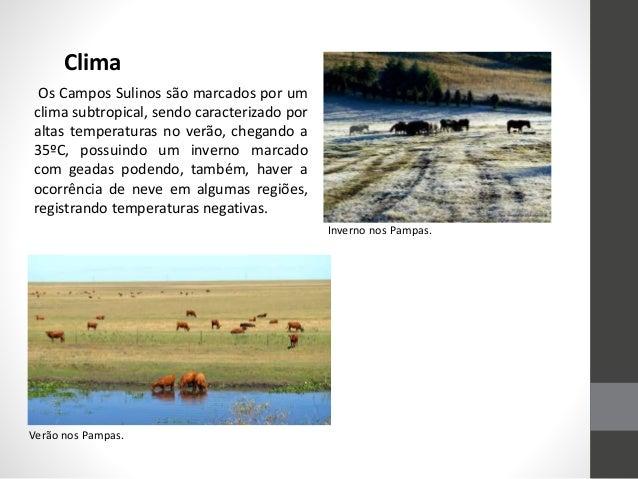 Clima Os Campos Sulinos são marcados por um clima subtropical, sendo caracterizado por altas temperaturas no verão, chegan...