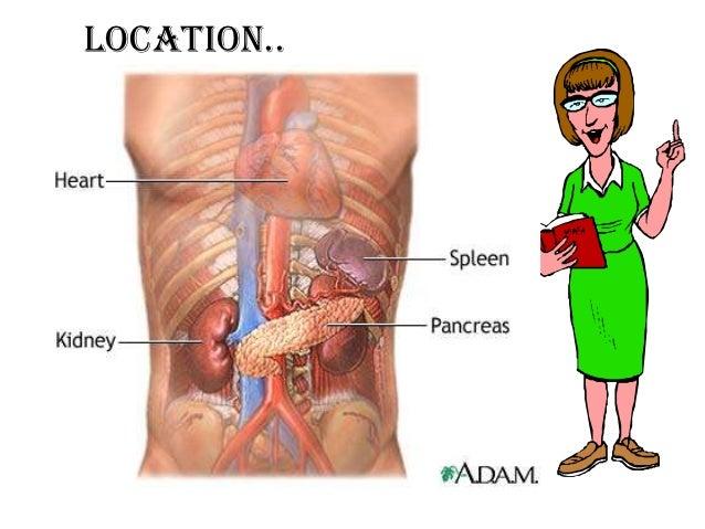 Pancreatic islet