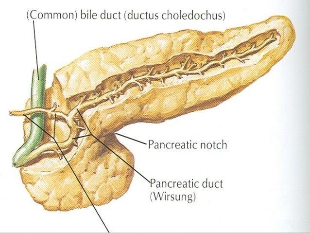 Pancreas Uncinate Process Pancreas Ct