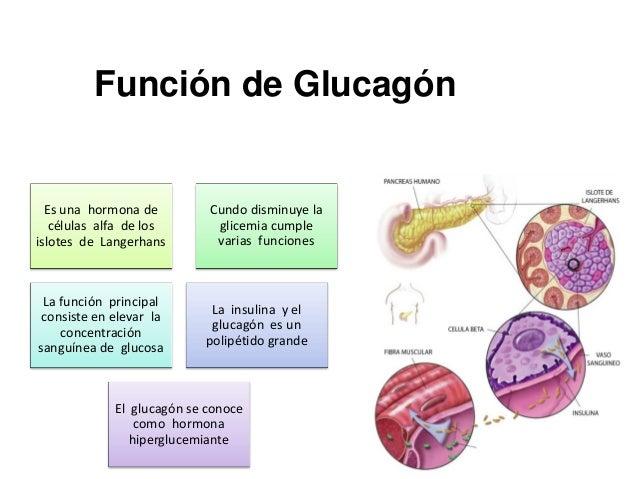 Pancreas clase ver