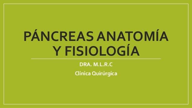 Pancreas anatomía y fisiología