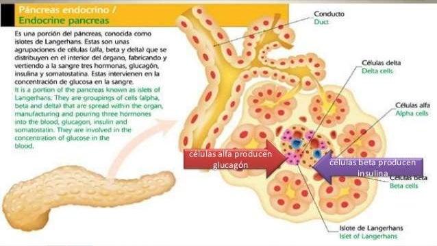 anabolicos y antiestrogenos