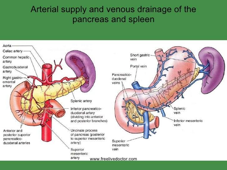 Diagram Of Pancreas And Spleen House Wiring Diagram Symbols