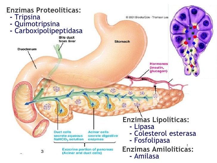 Enzimas Proteolíticas: -  Tripsina -  Quimotripsina -  Carboxipolipeptidasa Enzimas Lipolíticas: -  Lipasa Enzimas Amilolí...