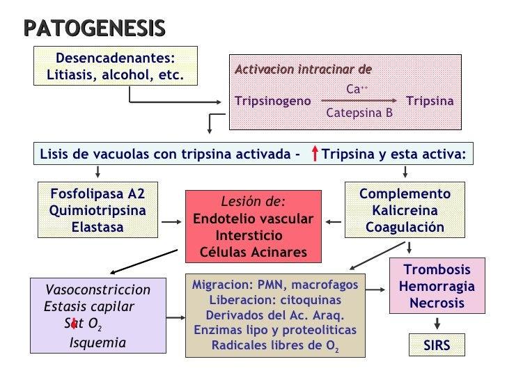 Desencadenantes: Litiasis, alcohol, etc. Fosfolipasa A2 Quimiotripsina Elastasa Complemento Kalicreina Coagulación Lesión ...