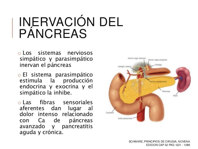 INERVACION DEL PANCREAS DOWNLOAD