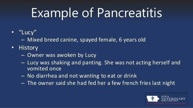What Can Dogs Eat With Pancreatitis