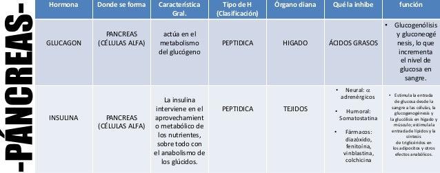 Hormonas del Pancreas