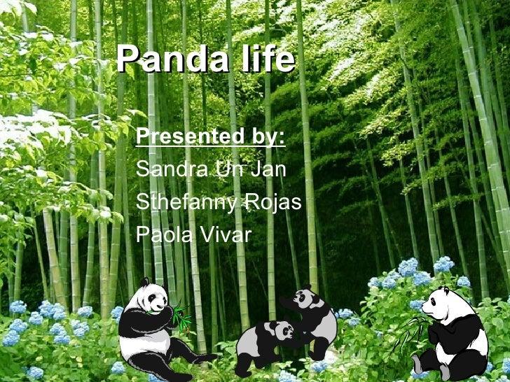 Panda   life Presented by: Sandra Un Jan Sthefanny Rojas Paola Vivar