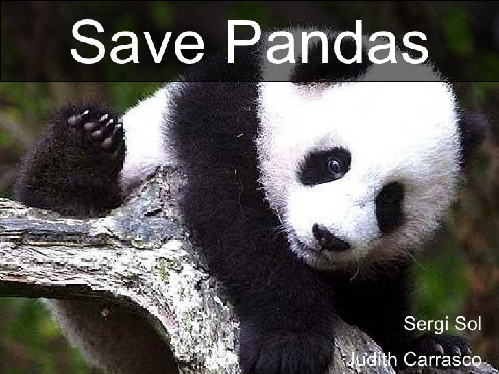 Sergi Sol Judith Carrasco Save Pandas