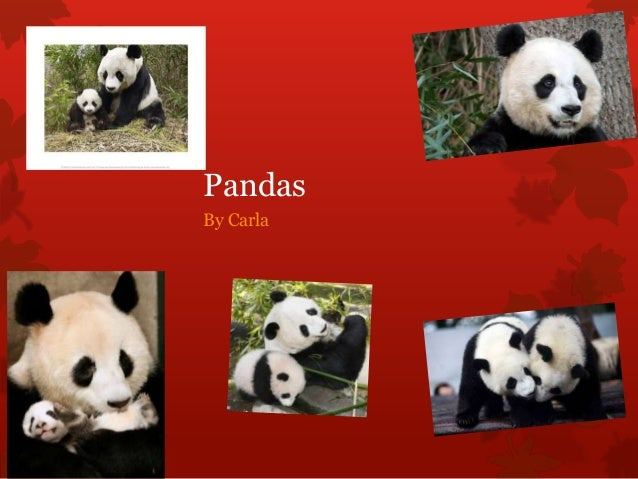 PandasBy Carla