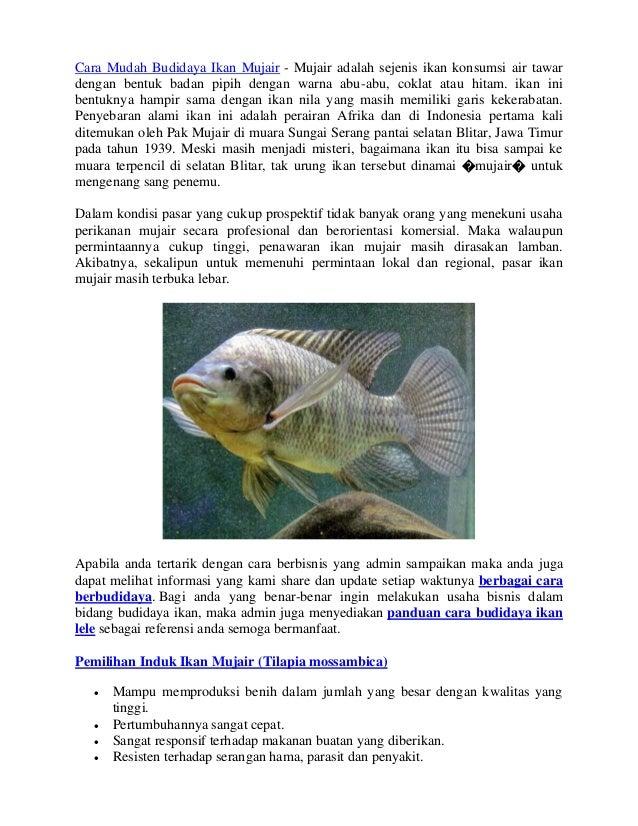 Panduan Lengkap Dalam Berbudidaya Ikan Mujair