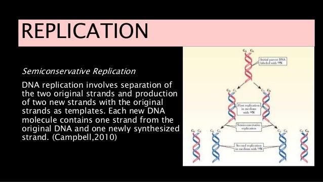 Panel biologi sel kel15 semiconservative replication dna replication involves pronofoot35fo Choice Image