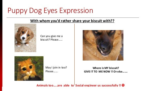 www.sisainfosec.com Puppy Dog Eyes Expression Animals too…..are able to Social engineer us successfully !!  With whom you...