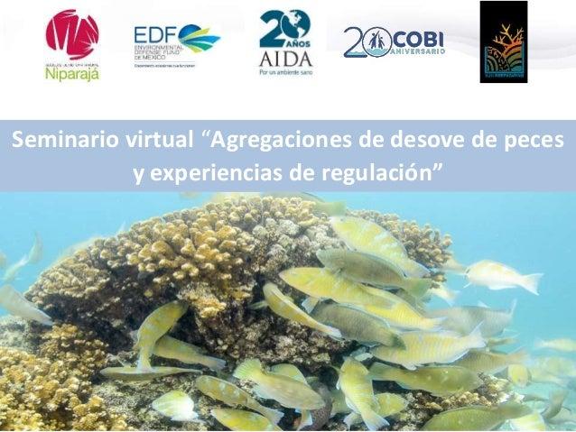 """Seminario virtual """"Agregaciones de desove de peces y experiencias de regulación"""""""