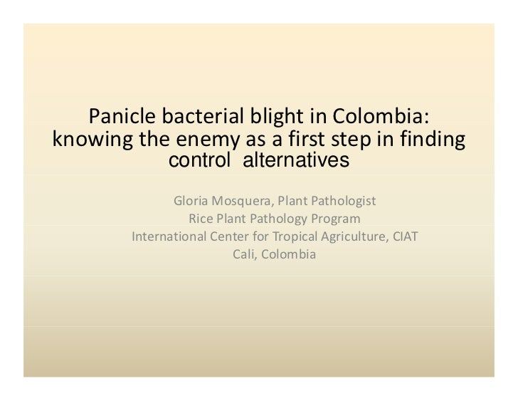 Panicle bacterial blight in Colombia:                         gknowing the enemy as a first step in finding               ...