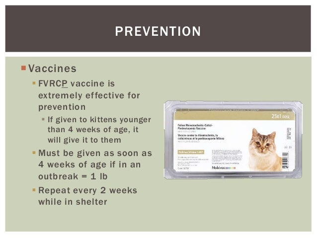 FVRCP Vaccinations | Catipedia from Purina® Cat Chow®