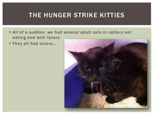 Calici Virus In Cats Kittens