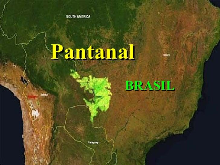 Pantanal BRASIL