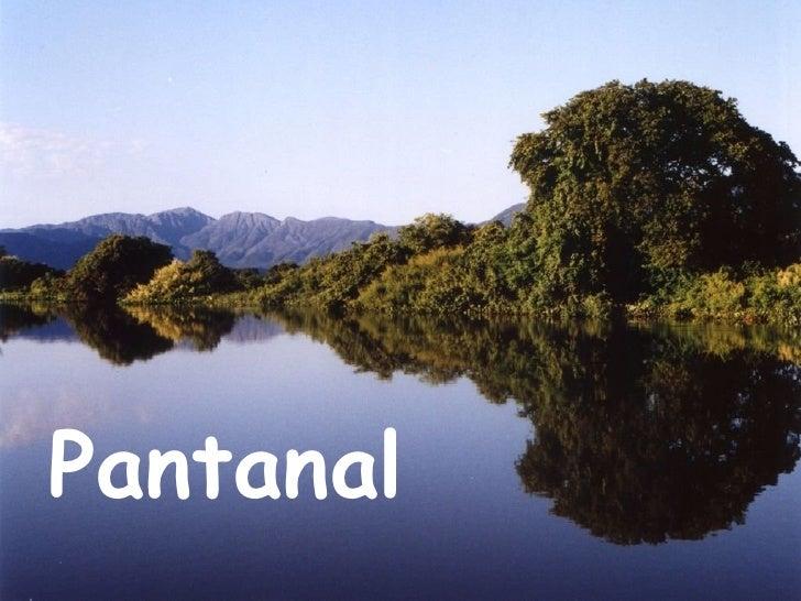 <ul><li>Pantanal </li></ul>