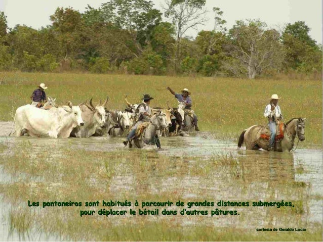Les passionnés d'écotourisme peuvent séjourner quelques jours dans : - un lodge : gîte situé dans une réserve, - une pousa...