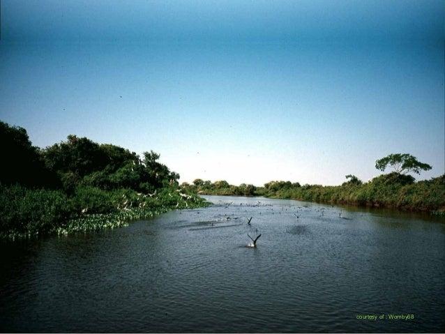 Venant des hauts plateaux, les rivières s'écoulent dans le PANTANALVenant des hauts plateaux, les rivières s'écoulent dans...