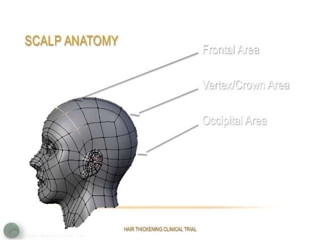 Image Gallery Vertex Anatomy