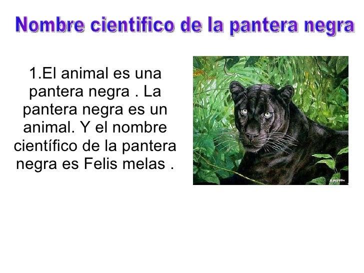 1.El animal es una pantera negra . La pantera negra es un animal. Y el nombre científico de la pantera negra es Felis mela...