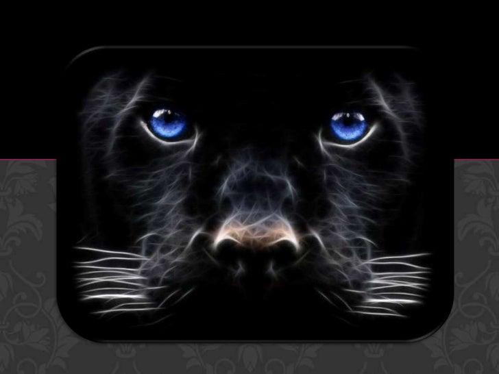 Nombre común                           Pantera negraReino                                  AnimalPhylum                   ...