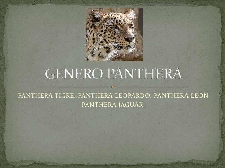 PANTHERA TIGRE, PANTHERA LEOPARDO, PANTHERA LEON<br />PANTHERA JAGUAR.<br />GENERO PANTHERA<br />