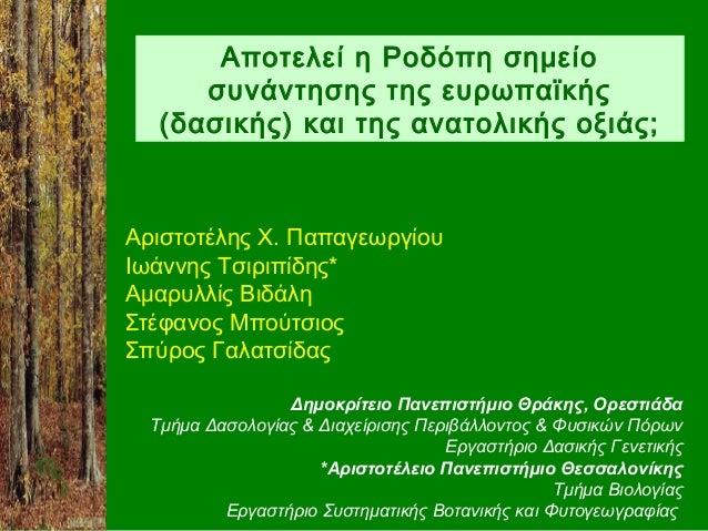 Αποτελεί η Ροδόπη σημείο      συνάντησης της ευρωπαϊκής   (δασικής) και της ανατολικής οξιάς;Αριστοτέλης Χ. ΠαπαγεωργίουΙω...