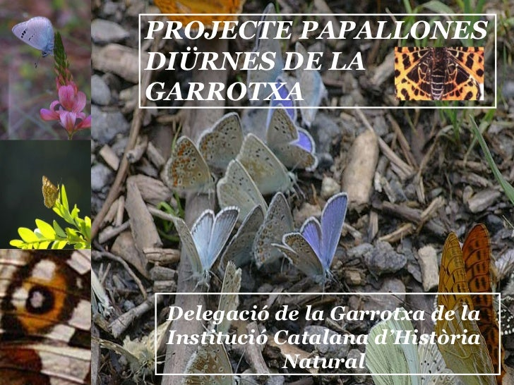 PROJECTE PAPALLONES DIÜRNES DE LA GARROTXA Delegació de la Garrotxa de la Institució Catalana d'Història Natural