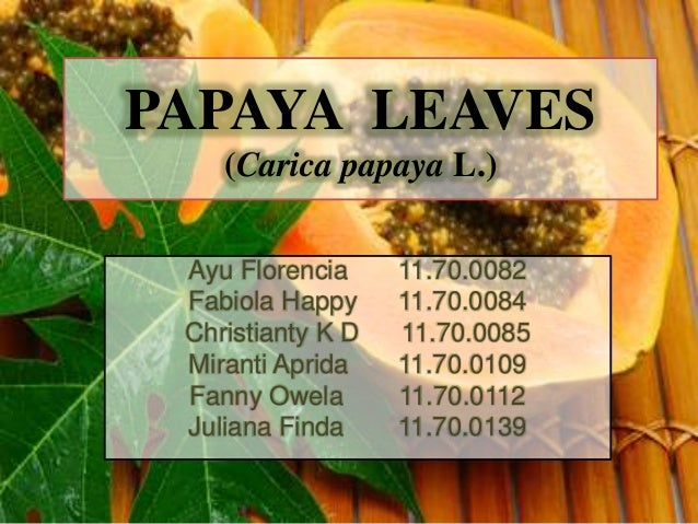 PAPAYA LEAVES (Carica papaya L.) Ayu Florencia 11.70.0082 Fabiola Happy 11.70.0084 Christianty K D 11.70.0085 Miranti Apri...