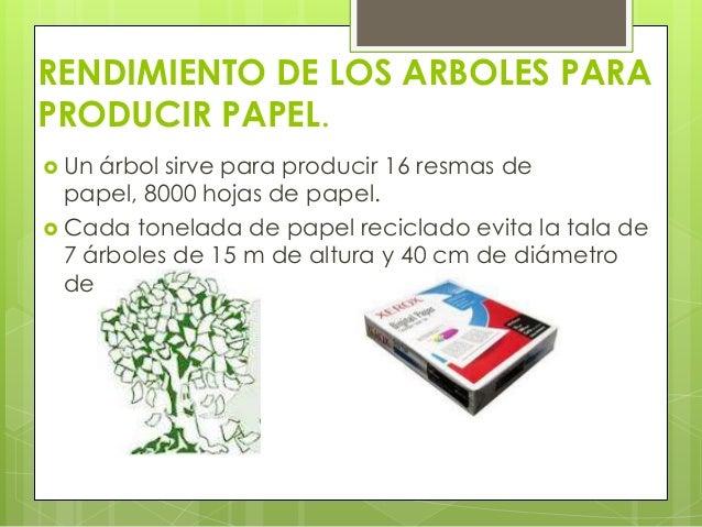 Explotaci n de bosques para la obtenci n de papel for Cuales son los tipos de arboles