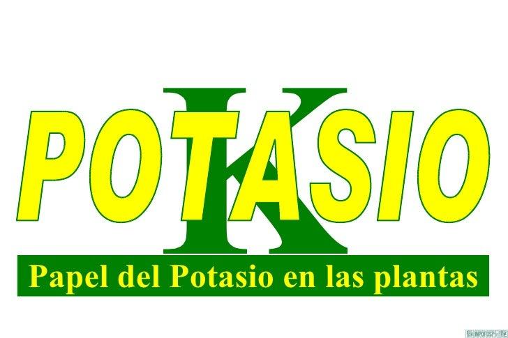 K Papel del Potasio en las plantas POTASIO