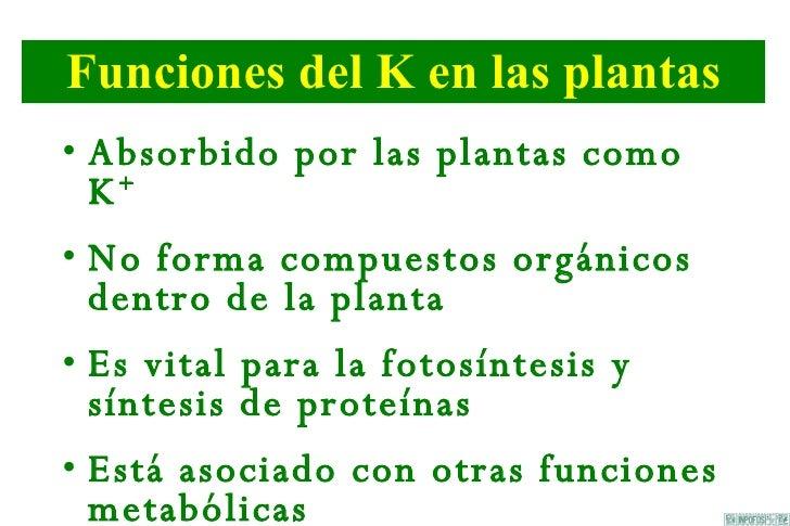 Papel De K En Las Plantas Slide 2