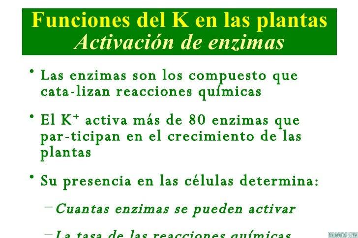 Papel De K En Las Plantas Slide 3